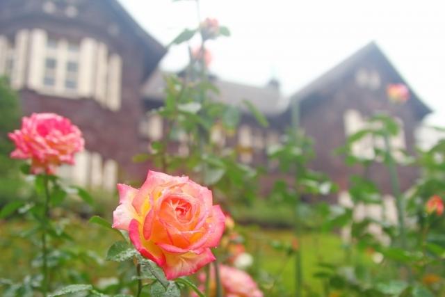 旧古河邸は西洋庭園にバラの花が咲き誇るクラシカルな洋館。邸宅内や庭園で前撮りやフォトウェディング、結婚写真の撮影が可能です
